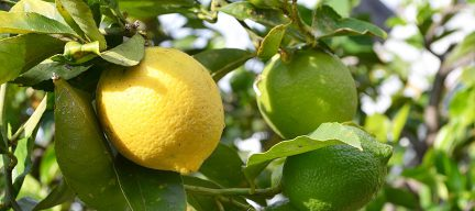 Tips citroen